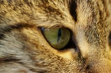 Free Eye Cats Royalty Free Stock Photos - 983618
