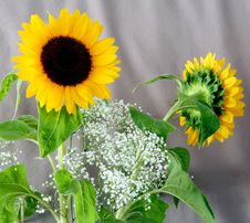 Free Sunflowers 2 Royalty Free Stock Images - 983859