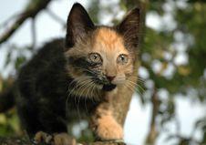 Free Scared Kitten Stock Image - 984211