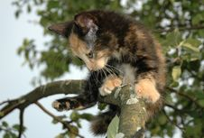 Free Clumsy Kitten Stock Photography - 984222