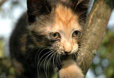 Free Kitten Portrait Stock Photo - 984230
