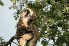 Free Looking Up Kitten Stock Photo - 984280