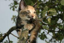 Free Skewbald Kitten On The Tree Stock Images - 984284