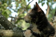 Free Skewbald Kitten On The Tree Stock Image - 984291