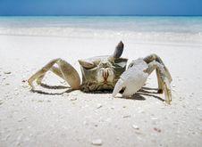 Free Crab Royalty Free Stock Image - 984736
