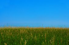 Free Grass Field Stock Photo - 985060