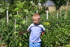 Free Gardener Boy Stock Photos - 985103