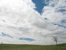 Free Summer Landscape With Alone Tree And Clouds Stock Photo - 986330