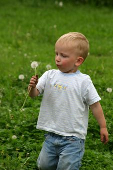 Free Boy And Dandelion Stock Photos - 986843