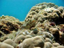 Free Lizardfish Stock Photography - 987562