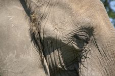 Free Elephant Head African Cl Up 2 Stock Photography - 988712