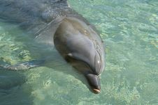 Free Dolphin In Clear Water Stock Photography - 988782
