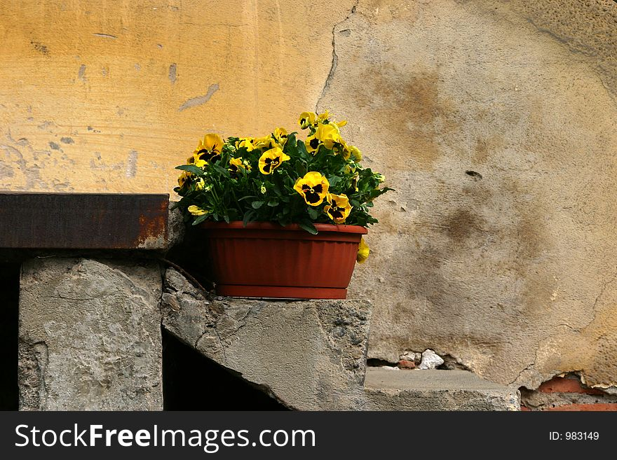 Bucket with pansies