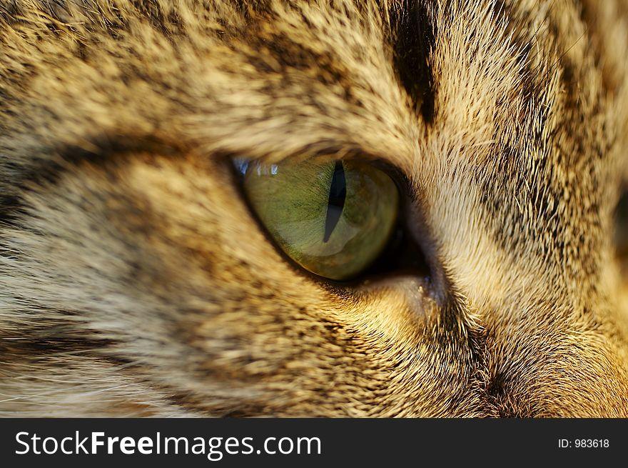 Eye cats