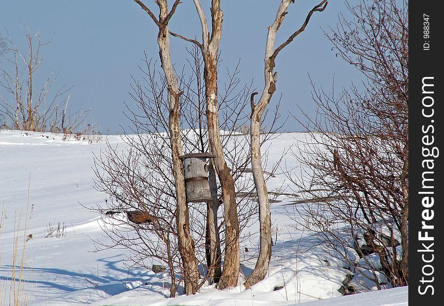 A bird s nesting-box