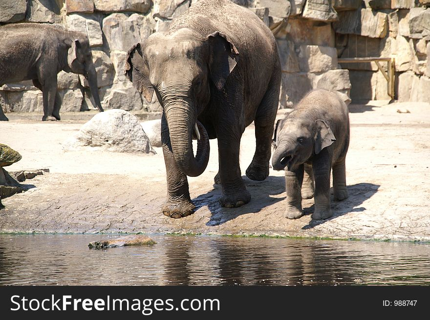 elephant baby learn to drink 2