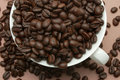 Free Coffee Beans In Cup Stock Photography - 9801312