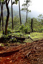 Free Forest Stock Images - 9802564