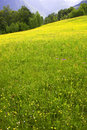 Free Meadow With Flowers Royalty Free Stock Images - 9809919