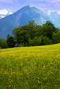 Free Meadow With Flowers Stock Images - 9809974