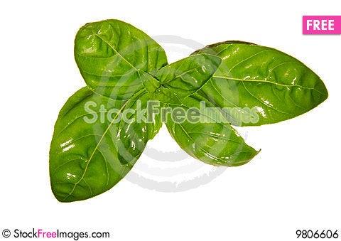 Free Fresh Basil Leaves Royalty Free Stock Image - 9806606