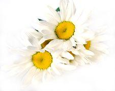 Free Flowers Stock Photos - 9801073