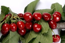 Free Cherries Isolated Royalty Free Stock Image - 9801076