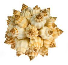 Free Seashell  Isolated On White Background Royalty Free Stock Photography - 9801897