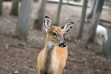 Free Little Deer Stock Photography - 9802642