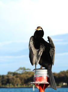 Free Cormorant Stock Image - 9802661