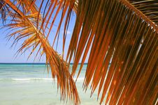 Free Palm Branch On Beach Royalty Free Stock Photos - 9802798