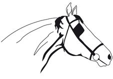 Free Horse Muzzle Royalty Free Stock Photography - 9804307