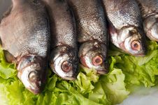 Free Fresh-water Fish Royalty Free Stock Images - 9804729