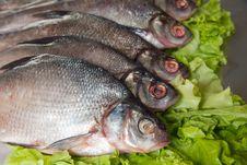 Free Fresh-water Fish Royalty Free Stock Photography - 9804857