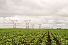 Free Power Pylons In A Sunflower Field Stock Image - 9806271