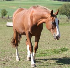 Free Beautiful Horse Stock Photography - 9807502
