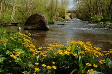 Free River And Water Lilys Stock Image - 9807711