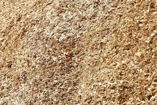 Wood Chips Of Eucalyptus Stock Photography