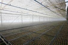 Free Eucalyptus Seedling Stock Photo - 9809030