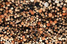 Free Wood Of Eucalyptus Royalty Free Stock Images - 9809199