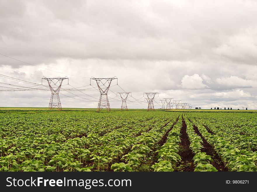 Power pylons in a sunflower field