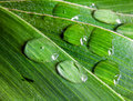 Free Big Leaf With Water Drops Stock Photography - 9818542