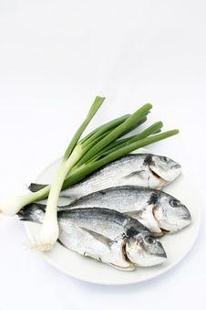 Free Fresh Seabream Stock Photography - 9810262