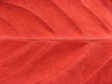 Free Read Leaf Background Stock Photos - 9812473