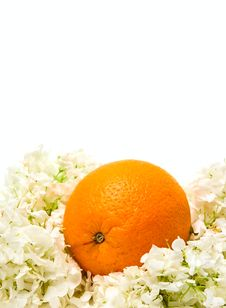 Free Orange And Flowers Royalty Free Stock Images - 9814479