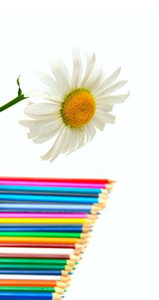 Free Camomile Flower And Color Pencils Stock Photography - 9814572