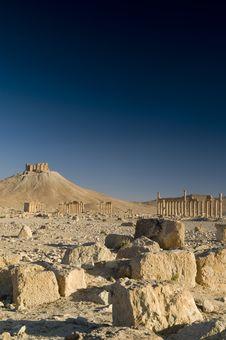 Free Palmyra Stock Photos - 9814903