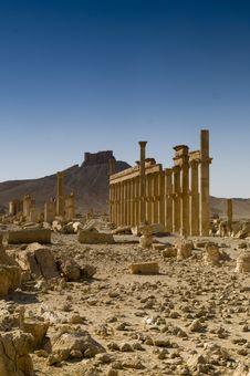 Free Palmyra Royalty Free Stock Image - 9814906