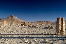 Free Palmyra Stock Photography - 9814932