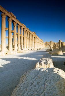 Free Palmyra Stock Images - 9814964